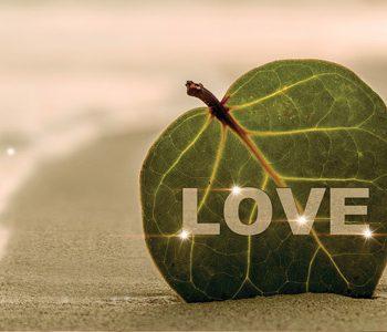 dolor_amor